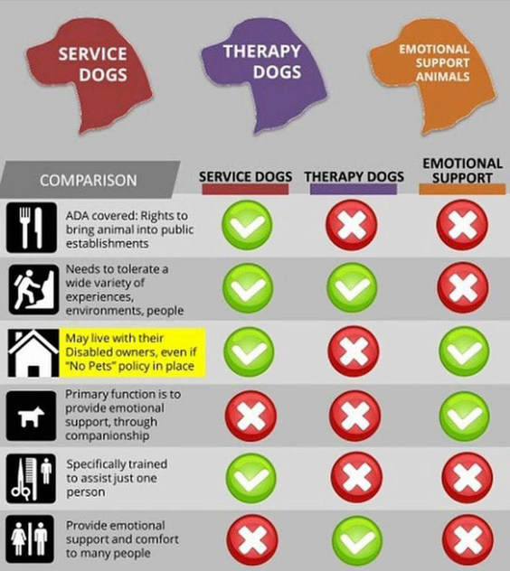 Service Animals Policy Highland Games